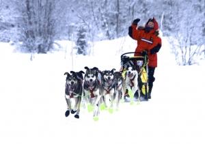 Elisabeth og hundene er klar for VM 2015!