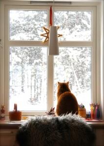 Pus undrer hvor snøen blir av.. foto: Anne Karang